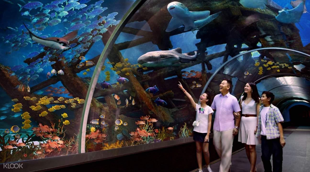 a family exploring the S.E.A. Aquarium in Sentosa, Singapore